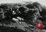 Image of annual wild horse round up Hayward California USA, 1930, second 12 stock footage video 65675032154