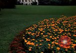 Image of Marigolds in bloom Washington DC USA, 1974, second 8 stock footage video 65675032288