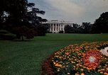 Image of Marigolds in bloom Washington DC USA, 1974, second 11 stock footage video 65675032288