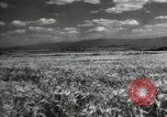 Image of new harvest Turkmenistan, 1949, second 12 stock footage video 65675032367
