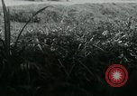 Image of Viet Cong watching U.S. soldiers in Jeep Vietnam, 1965, second 12 stock footage video 65675032686