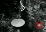 Image of Rural Vietnamese tapping rubber trees Vietnam, 1965, second 1 stock footage video 65675032688