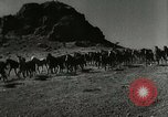 Image of cowboy activities United States USA, 1943, second 2 stock footage video 65675032777