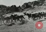 Image of cowboy activities United States USA, 1943, second 4 stock footage video 65675032777