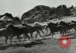 Image of cowboy activities United States USA, 1943, second 5 stock footage video 65675032777