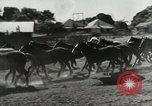 Image of cowboy activities United States USA, 1943, second 6 stock footage video 65675032777