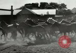 Image of cowboy activities United States USA, 1943, second 7 stock footage video 65675032777