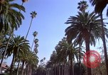 Image of Palm tree lined street in neighborhood Los Angeles California USA, 1976, second 2 stock footage video 65675033263