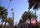 Image of Palm tree lined street in neighborhood Los Angeles California USA, 1976, second 3 stock footage video 65675033263