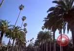 Image of Palm tree lined street in neighborhood Los Angeles California USA, 1976, second 4 stock footage video 65675033263