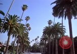 Image of Palm tree lined street in neighborhood Los Angeles California USA, 1976, second 5 stock footage video 65675033263