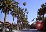 Image of Palm tree lined street in neighborhood Los Angeles California USA, 1976, second 6 stock footage video 65675033263