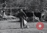 Image of The Afghan Hound Hamburg Germany, 1965, second 11 stock footage video 65675033541