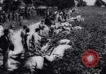 Image of Cotton picking contest United States USA, 1942, second 8 stock footage video 65675033546