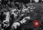 Image of Cotton picking contest United States USA, 1942, second 10 stock footage video 65675033546