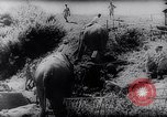 Image of Indian elephants Burma, 1944, second 5 stock footage video 65675033570