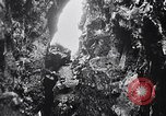 Image of birds and rock formation Clipperton Island, 1943, second 5 stock footage video 65675033679