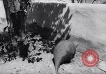Image of aardvark Florida United States USA, 1967, second 7 stock footage video 65675033690