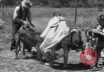 Image of doggy chariot race Baker Oregon USA, 1938, second 7 stock footage video 65675033695