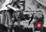 Image of doggy chariot race Baker Oregon USA, 1938, second 12 stock footage video 65675033695