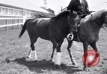 Image of War Admiral Belmont Park New York USA, 1938, second 5 stock footage video 65675033910