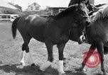 Image of War Admiral Belmont Park New York USA, 1938, second 6 stock footage video 65675033910