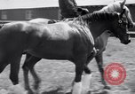 Image of War Admiral Belmont Park New York USA, 1938, second 9 stock footage video 65675033910