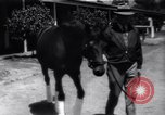 Image of Seabiscuit California United States USA, 1940, second 8 stock footage video 65675033957