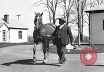 Image of Man o War Lexington Kentucky USA, 1938, second 6 stock footage video 65675033970