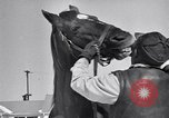 Image of Man O' War Lexington Kentucky USA, 1946, second 10 stock footage video 65675033974