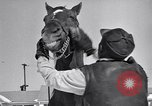 Image of Man O' War Lexington Kentucky USA, 1946, second 11 stock footage video 65675033974