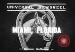 Image of Stagehand and War Admiral Miami Florida USA, 1939, second 2 stock footage video 65675034118