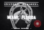 Image of Stagehand and War Admiral Miami Florida USA, 1939, second 4 stock footage video 65675034118