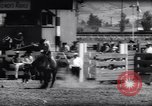 Image of horse and bull ride San Jose California USA, 1961, second 11 stock footage video 65675034156