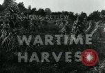 Image of farm harvest in America during World War 2 United States USA, 1942, second 4 stock footage video 65675034628