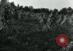 Image of farm harvest in America during World War 2 United States USA, 1942, second 5 stock footage video 65675034628