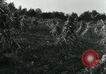 Image of farm harvest in America during World War 2 United States USA, 1942, second 6 stock footage video 65675034628