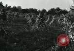 Image of farm harvest in America during World War 2 United States USA, 1942, second 7 stock footage video 65675034628