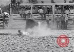 Image of Palm Springs Rodeo California United States USA, 1953, second 10 stock footage video 65675034644