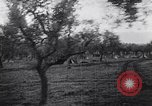 Image of French troops Italy, 1942, second 10 stock footage video 65675034677