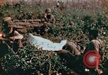 Image of prisoners Saipan Northern Mariana Islands, 1944, second 11 stock footage video 65675034834