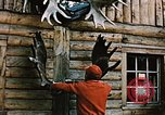 Image of Moose antlers being fastened to a log cabin Alaska USA, 1954, second 2 stock footage video 65675034930