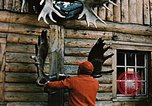 Image of Moose antlers being fastened to a log cabin Alaska USA, 1954, second 3 stock footage video 65675034930