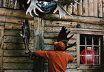 Image of Moose antlers being fastened to a log cabin Alaska USA, 1954, second 4 stock footage video 65675034930