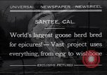 Image of goose herd Santee California USA, 1932, second 1 stock footage video 65675035145