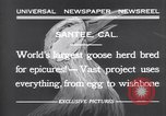 Image of goose herd Santee California USA, 1932, second 4 stock footage video 65675035145