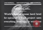 Image of goose herd Santee California USA, 1932, second 5 stock footage video 65675035145