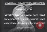 Image of goose herd Santee California USA, 1932, second 7 stock footage video 65675035145