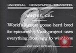 Image of goose herd Santee California USA, 1932, second 9 stock footage video 65675035145
