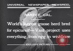 Image of goose herd Santee California USA, 1932, second 12 stock footage video 65675035145